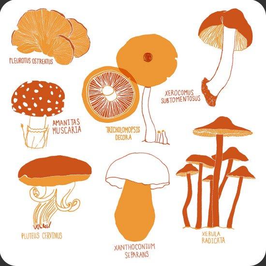 Mushroom イラスト