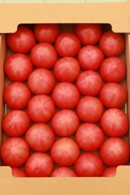 トマト M