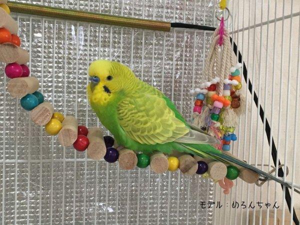 新ケージトップマルチジム○虹の橋