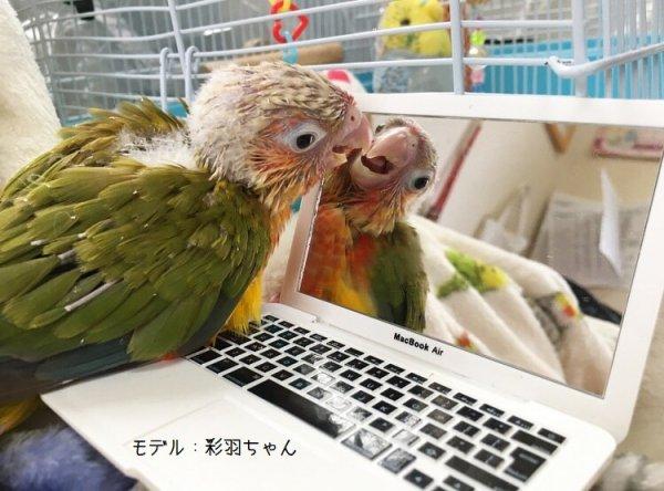 ミニサイズ☆鳥さん専用パソコン型ミラー!