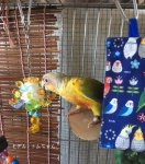 <img class='new_mark_img1' src='https://img.shop-pro.jp/img/new/icons57.gif' style='border:none;display:inline;margin:0px;padding:0px;width:auto;' />Jerry's bird toy〇くま土星★黄色系(オールステンレス製)