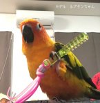 <img class='new_mark_img1' src='https://img.shop-pro.jp/img/new/icons57.gif' style='border:none;display:inline;margin:0px;padding:0px;width:auto;' />Jerry's bird toy〇ハンドトイ くし