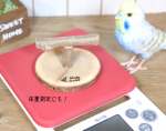 <img class='new_mark_img1' src='https://img.shop-pro.jp/img/new/icons57.gif' style='border:none;display:inline;margin:0px;padding:0px;width:auto;' />Birdsふぉるすオリジナル〇止まり木S