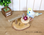 <img class='new_mark_img1' src='https://img.shop-pro.jp/img/new/icons57.gif' style='border:none;display:inline;margin:0px;padding:0px;width:auto;' />Birdsふぉるすオリジナル〇食事もできちゃう止まり木