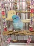 Jerry's Bird Toy〇オールステンレス☆カクタスブランコ・Sサイズ【ボール】