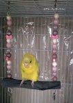 Jerry's Bird Toy〇オールステンレス備長炭ブランコ◆ちょこれいと