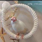 《コトリ》ぬくぬくブランコ・文鳥さんサイズ(SS)