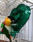 フォレイジングトイ○マスターマインドフォージングハート【小鳥のキモチVol.2掲載】