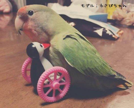 愛鳥さんのお友達○ゴーゴーペンギン