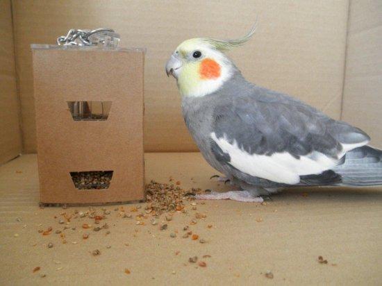 小型さん向き知育トイ○フィーダーボックス用レフィル(紙製のカバー)