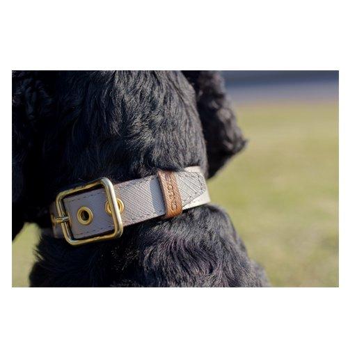 Collar < For DOG >