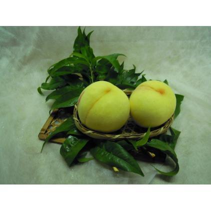 黄金桃(ご家庭用・大箱:個数は園主にお任せ)