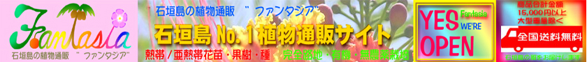 """石垣島の植物通販 """"ファンタジア"""""""