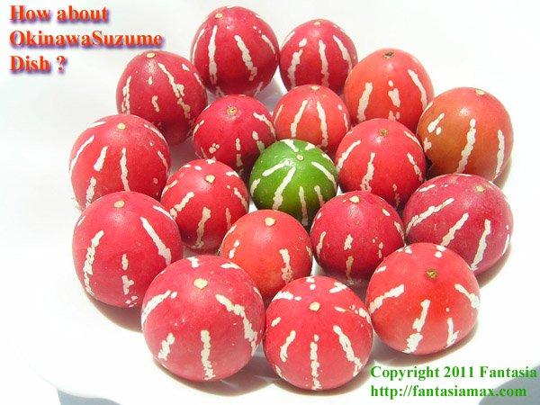 鮮烈で可愛い!! 真っ赤な地肌に真っ白なウリ模様 オキナワスズメウリの種(種表面の白緑皮はカビではない 十分に水洗後播種):1包(20粒)