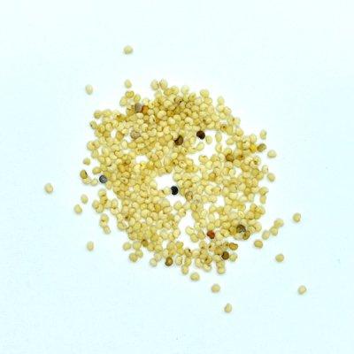 ポピーシード Poppy Seed (30g)
