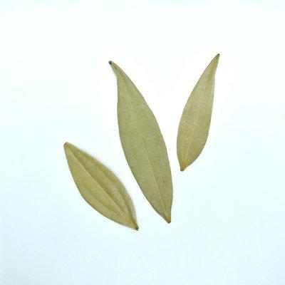 ベイリーフ Bay Leaf (10g)