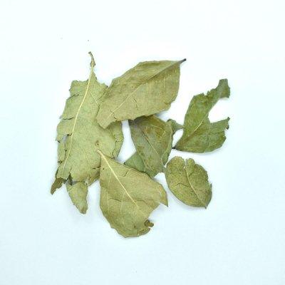 カレーリーフ Curry Leaf (10g)