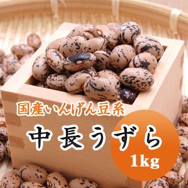 【29年産】北海道産 中長うずら(1kg)