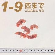 冷凍ピンクマウス Sサイズ 1匹〜9匹ご注文
