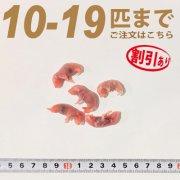 冷凍ピンクマウス Sサイズ 10匹〜19匹ご注文