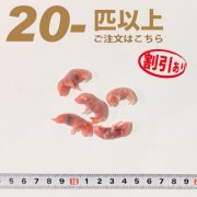 冷凍ピンクマウス Sサイズ 20匹以上ご注文