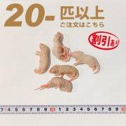 冷凍ピンクマウス Mサイズ 20匹以上ご注文