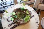 バードネスト・鳥の巣