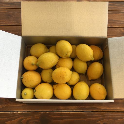 大崎上島産レモン