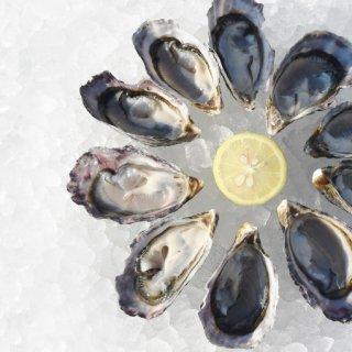 瞬間凍結 ストライプクレールオイスター(ハーフシェル)(冷凍 塩田熟成縞牡蠣)