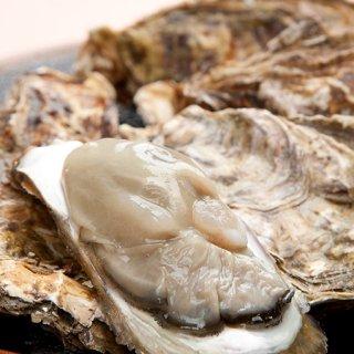 大粒 クレールオイスター塩田熟成牡蠣 12個入り