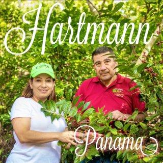パナマ|ハートマン農園|カツーラハニー|ハートマンズハニー|焙煎豆 2019/2020(浅煎り)
