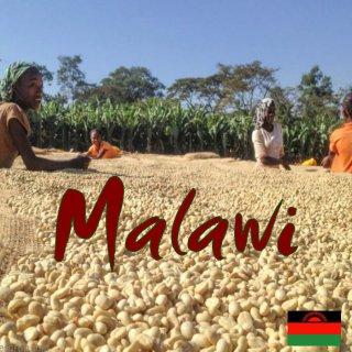 マラウィ|ウシンギニ農園|自由の夜明け|2019/2020 生豆
