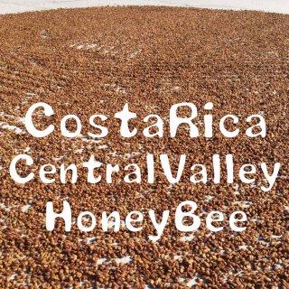 コスタリカ |セントラルバレー・ソノラ農園 | ハニー |HoneyBee|2019/2020 (生豆)