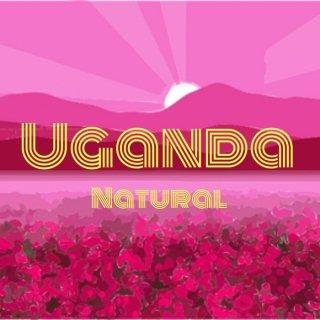ウガンダ|ルウェンゾリ山地|ブゴンズ族の古豪|アン・ウォッシュ| 2020/2021  焙煎豆(浅煎り)