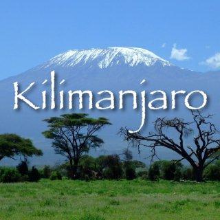 タンザニア|AA|キリマンジャロ・クラッシック|2019/2020 焙煎豆(中浅煎り)
