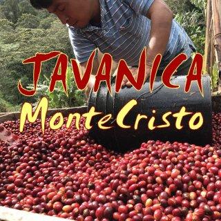 ニカラグア|モンテクリスト農園|ジャバニカ 自然栽培|セミナチュラル|2018/2019 生豆
