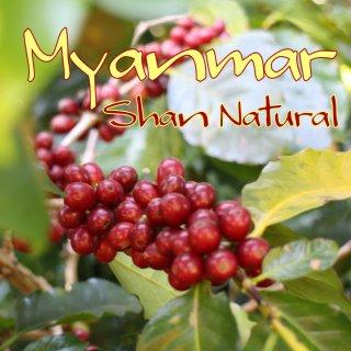 ミャンマー|シャンステート・ユアンガン|自然栽培ナチュラル|2018/2019 生豆