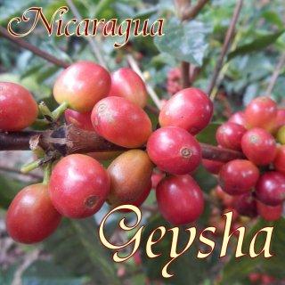ニカラグア |モンテクリスト農園|有機栽培ゲイシャ|2018/2019 生豆