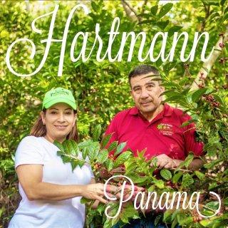 パナマ|ハートマン農園|カツーラナチュラル|ハートマンズベリー|2019/2020 生豆