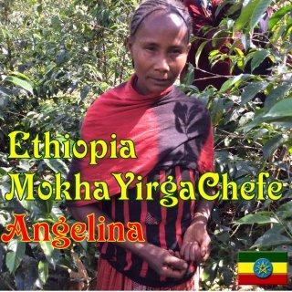 エチオピア | モカ イルガチェフェG1 ウォッシュド・コチャレ|  アンジェリーナ |2020/2021 焙煎豆(中浅煎り)