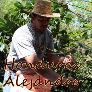 ホンジュラス|ロス・ヒカケス農園|アレハンドロ|2019/2020|生豆