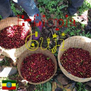 エチオピア|モカ・グジ|シダモの新星|2020/2021 生豆
