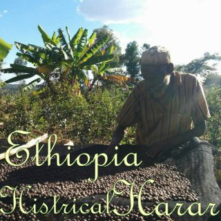 エチオピア|モカハラー|古のハラール|2019/2020 焙煎豆(極・深煎り)