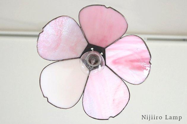 Sakura さくら【画像12】