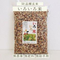 いろいろ米-約50品種の玄米 無農薬・自然栽培(栃木県産)