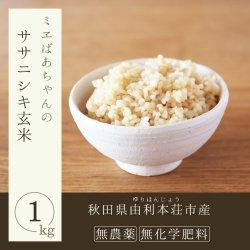 無農薬玄米(ササニシキ玄米)1kg-由利本荘産-2019年度秋新米