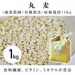 丸麦(浦部農園・有機農法・原種栽培)1�