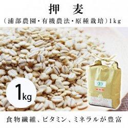 押麦(浦部農園・有機農法・原種栽培)1�