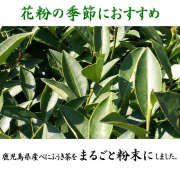 べにふうき茶(紅富貴茶) 花粉の季節に