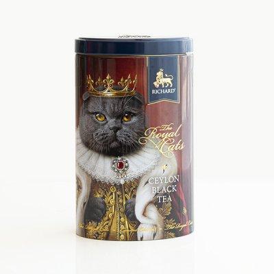 RICHARD / Royal Cats / スコティッシュフォールド